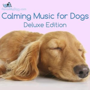 calming music for dogs - reduce anxiety during fireworks, storms, separation and car journeys Calming Music for Dogs – Reduce Anxiety During Fireworks, Storms, Separation and Car Journeys Calming Music for Dogs Reduce Anxiety During Fireworks Storms Separation and Car Journeys 0 300x300