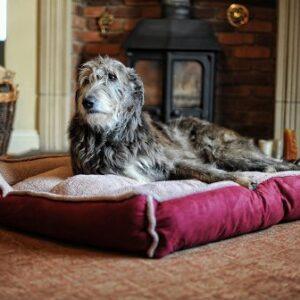 fleece cradle dog bed size xxlarge Fleece Cradle Dog Bed Size XXLARGE Fleece Cradle Dog Bed Size XXLARGE 0 300x300
