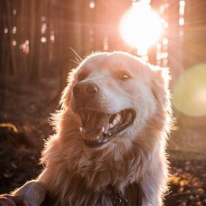 Dog Supplements homepage Homepage dog images 300x300