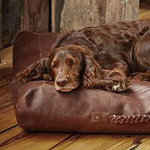 Leather dog sofa homepage Homepage dog13 1